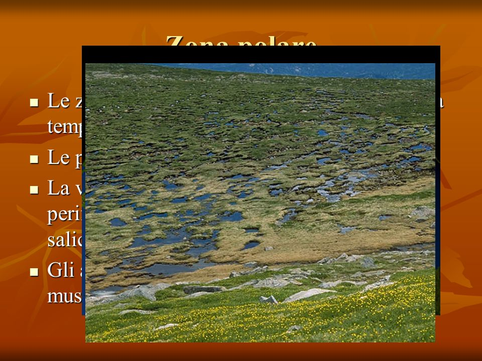 Zona polare Le zona polare si trova costantemente con una temperatura media sotto lo 0° Le precipitazioni sono solide.