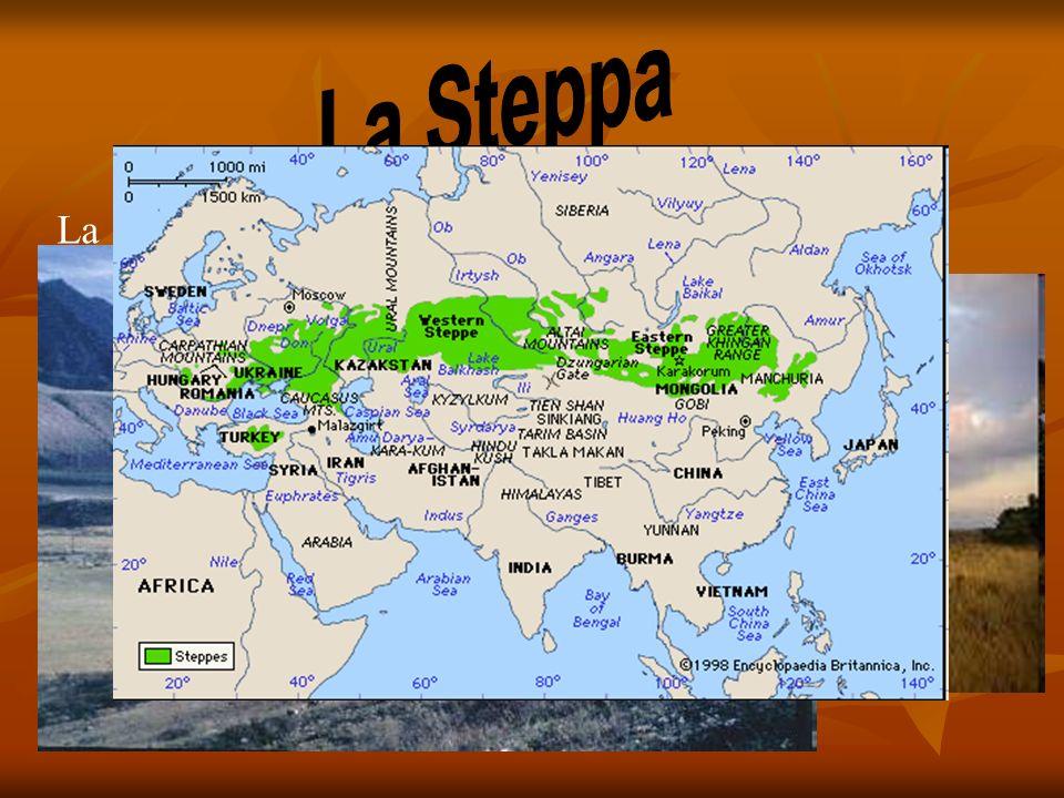 La Steppa La steppa è un bioma caratterizzato da vegetazione erbacea.