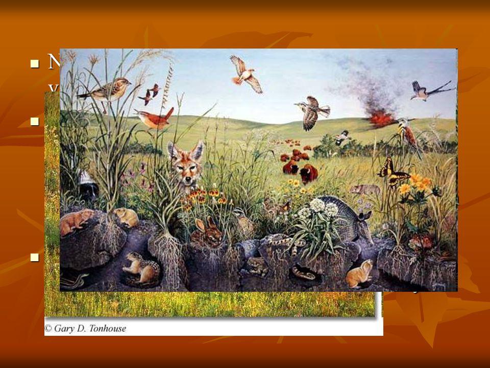Nelle grandi praterie la fauna è estremamente variegata :