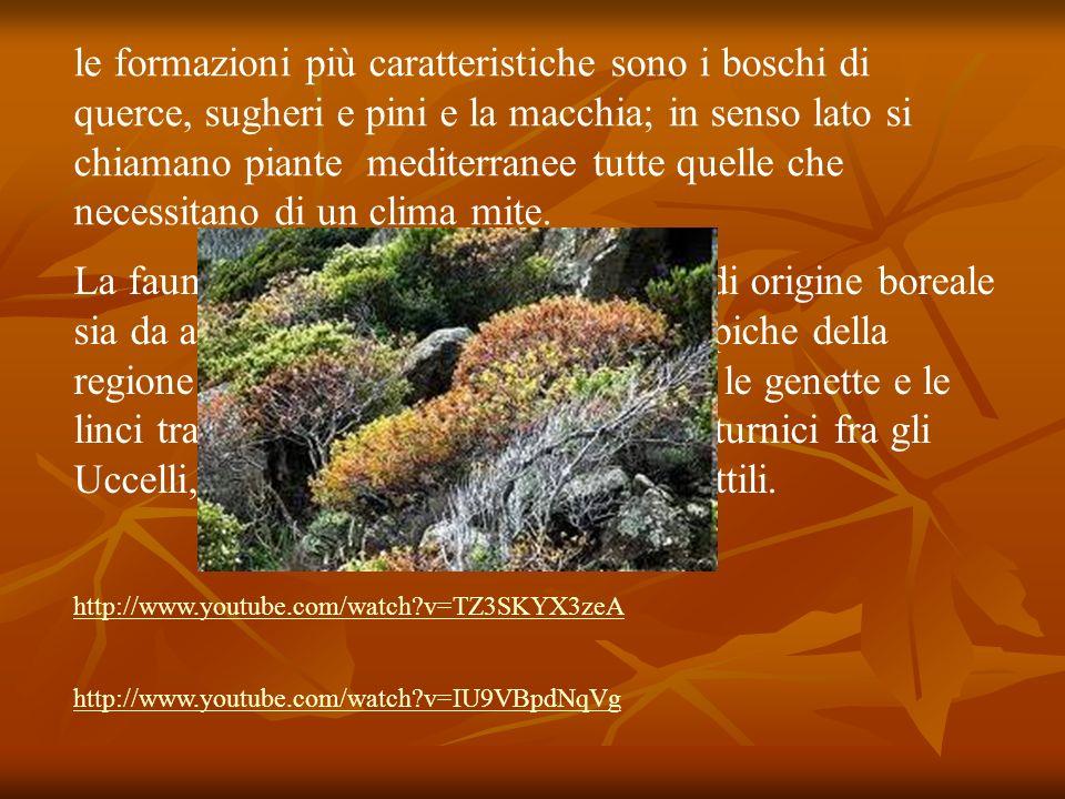 le formazioni più caratteristiche sono i boschi di querce, sugheri e pini e la macchia; in senso lato si chiamano piante mediterranee tutte quelle che necessitano di un clima mite.