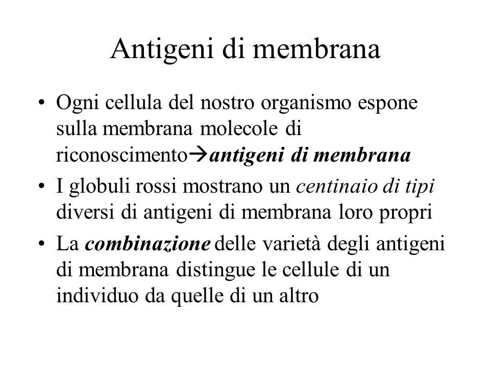 Antigeni di membrana Ogni cellula del nostro organismo espone sulla membrana molecole di riconoscimentoantigeni di membrana.