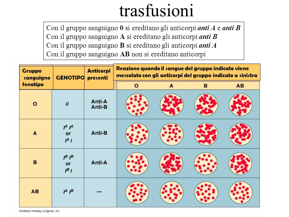 trasfusioni Con il gruppo sanguigno 0 si ereditano gli anticorpi anti A e anti B. Con il gruppo sanguigno A si ereditano gli anticorpi anti B.
