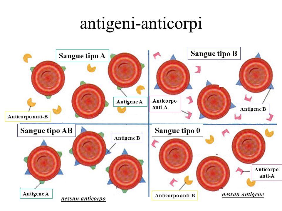 antigeni-anticorpi Sangue tipo A Sangue tipo 0 Sangue tipo B