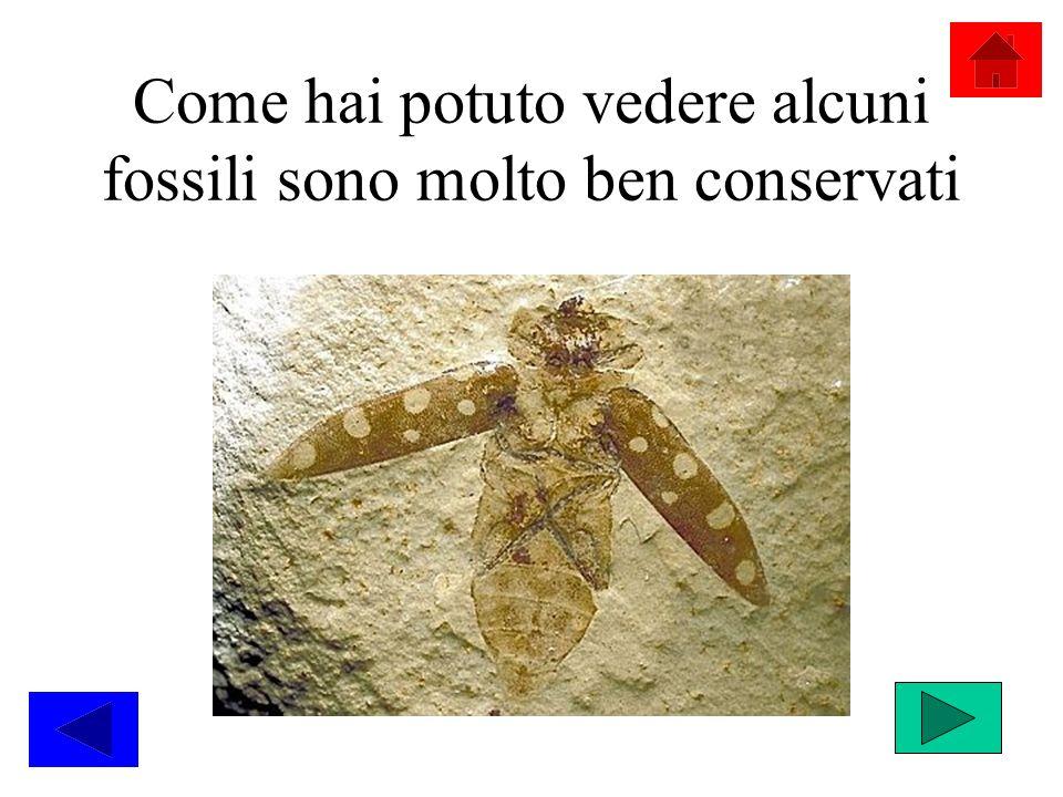 Come hai potuto vedere alcuni fossili sono molto ben conservati