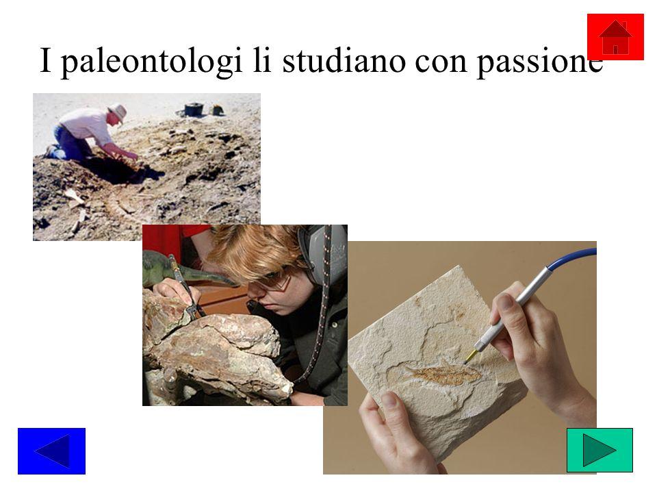I paleontologi li studiano con passione