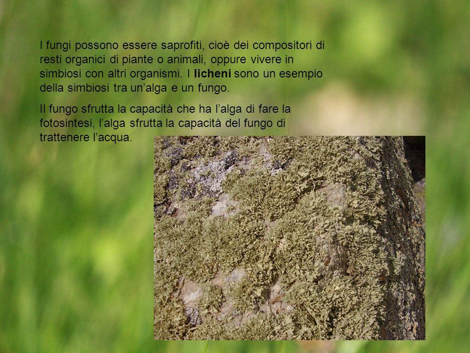 I fungi possono essere saprofiti, cioè dei compositori di resti organici di piante o animali, oppure vivere in simbiosi con altri organismi. I licheni sono un esempio della simbiosi tra un'alga e un fungo.