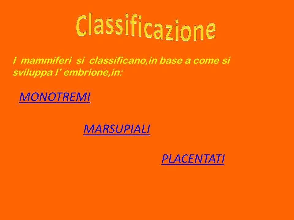 Classificazione MONOTREMI MARSUPIALI PLACENTATI