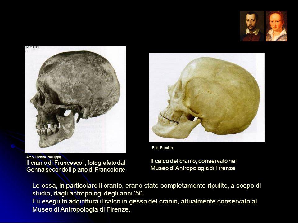 Foto BecattiniArch. Genna (da Lippi) Il cranio di Francesco I, fotografato dal Genna secondo il piano di Francoforte.