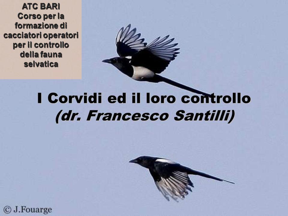 I Corvidi ed il loro controllo (dr. Francesco Santilli)