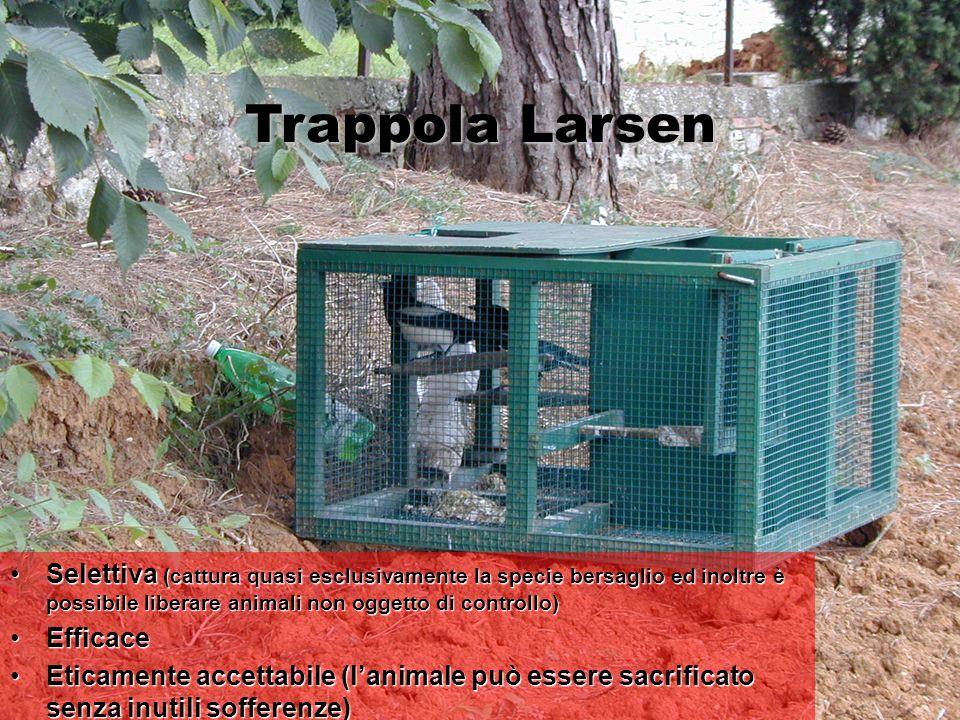 Trappola Larsen Selettiva (cattura quasi esclusivamente la specie bersaglio ed inoltre è possibile liberare animali non oggetto di controllo)