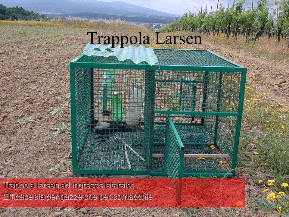 Trappola Larsen Trappola larsen ad ingresso laterale: