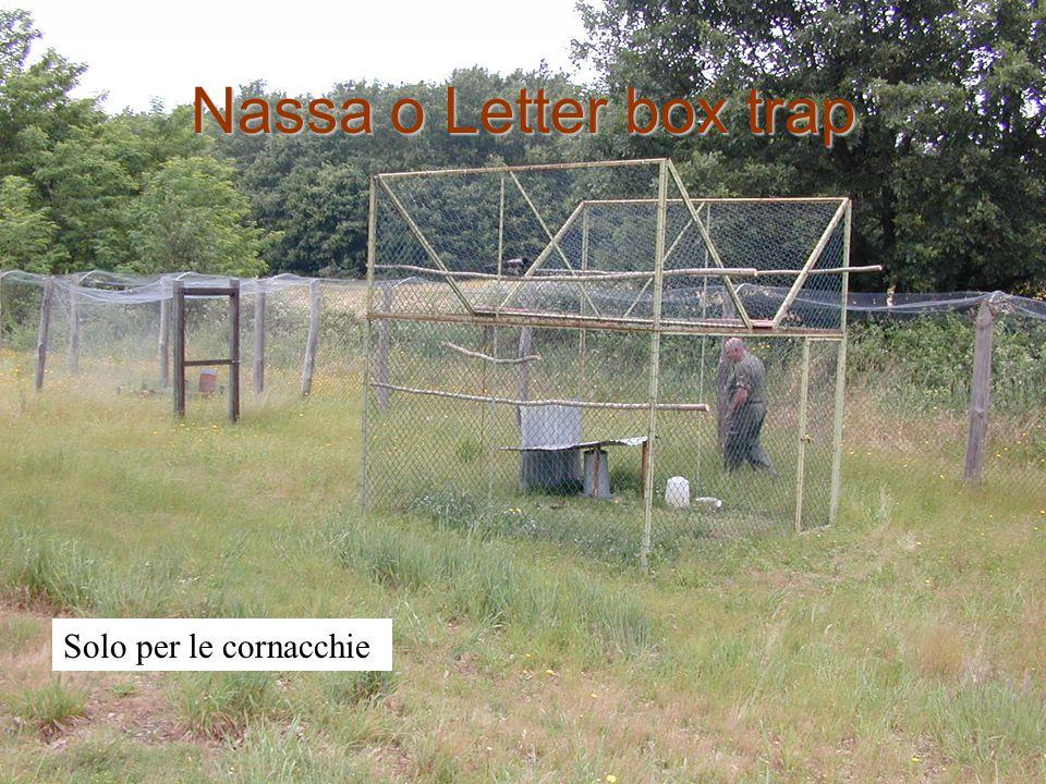 Nassa o Letter box trap Solo per le cornacchie