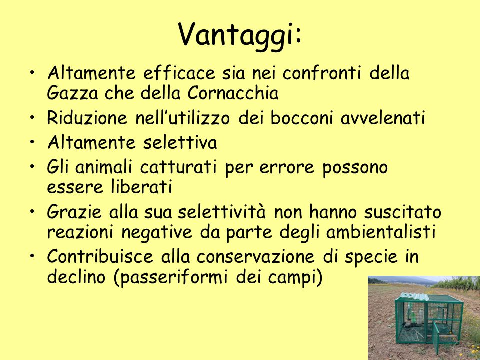 Vantaggi: Altamente efficace sia nei confronti della Gazza che della Cornacchia. Riduzione nell'utilizzo dei bocconi avvelenati.