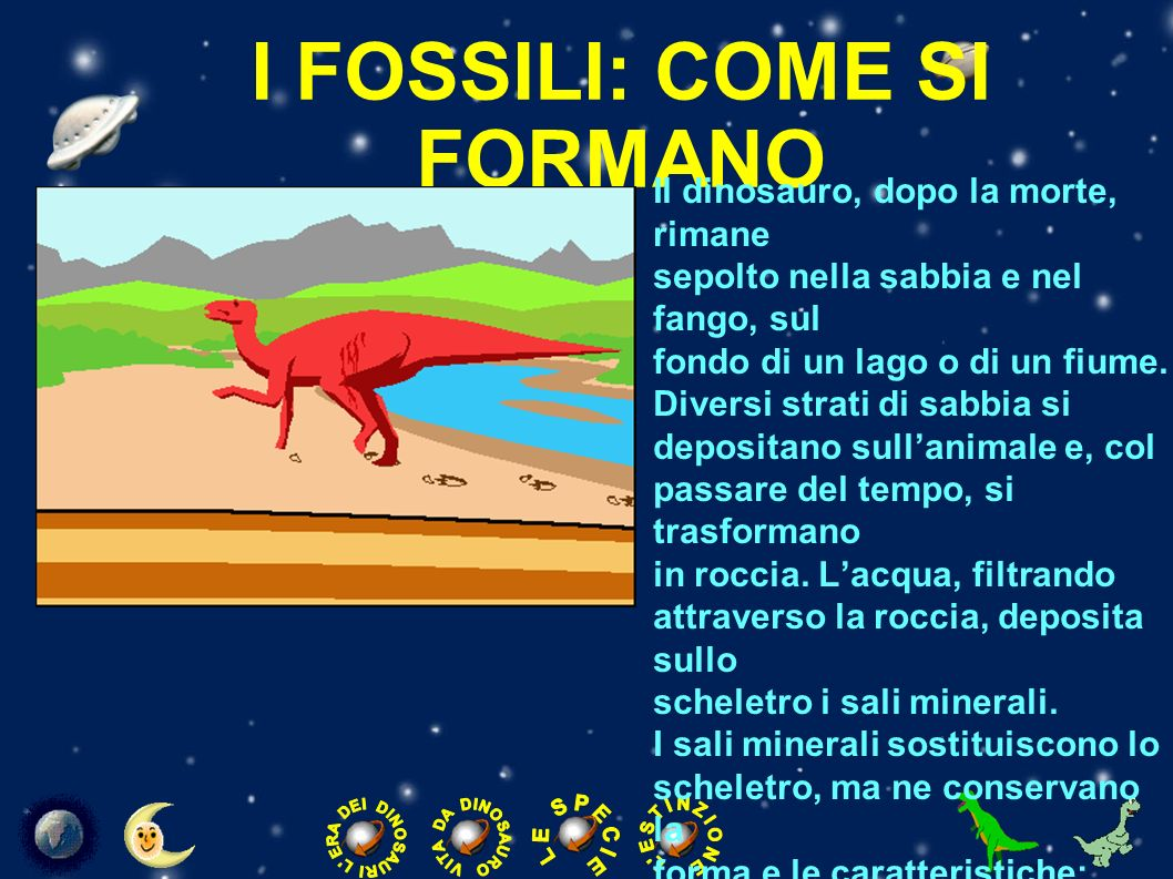 I FOSSILI: COME SI FORMANO