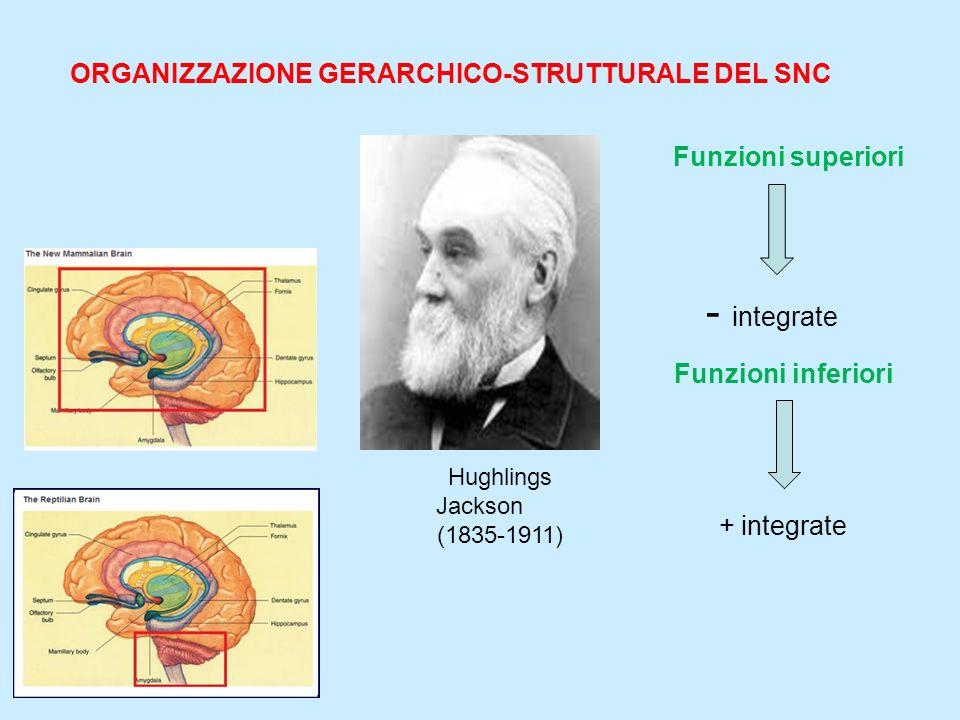 - integrate ORGANIZZAZIONE GERARCHICO-STRUTTURALE DEL SNC