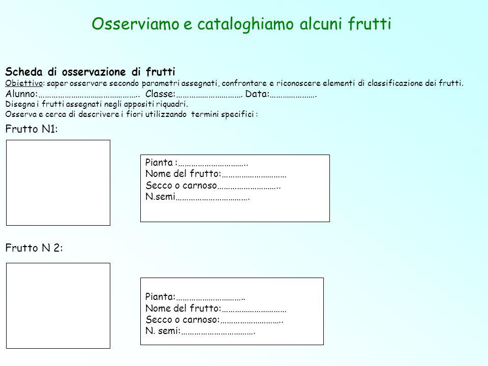 Osserviamo e cataloghiamo alcuni frutti