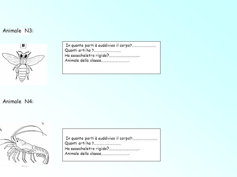 Animale N3: Animale N4: In quante parti è suddiviso il corpo ………………………