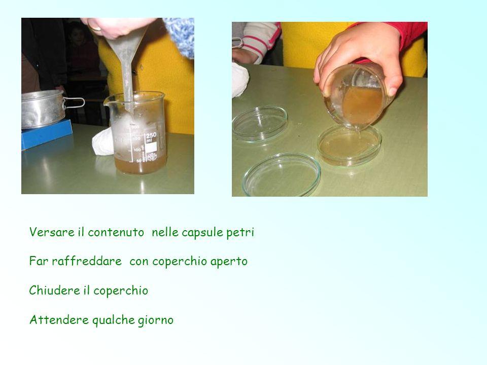 Versare il contenuto nelle capsule petri