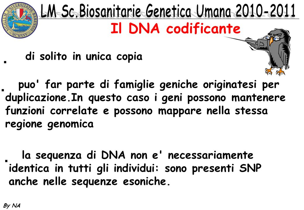 Il DNA codificante di solito in unica copia