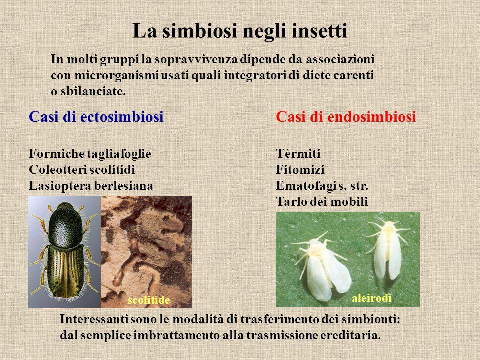 La simbiosi negli insetti