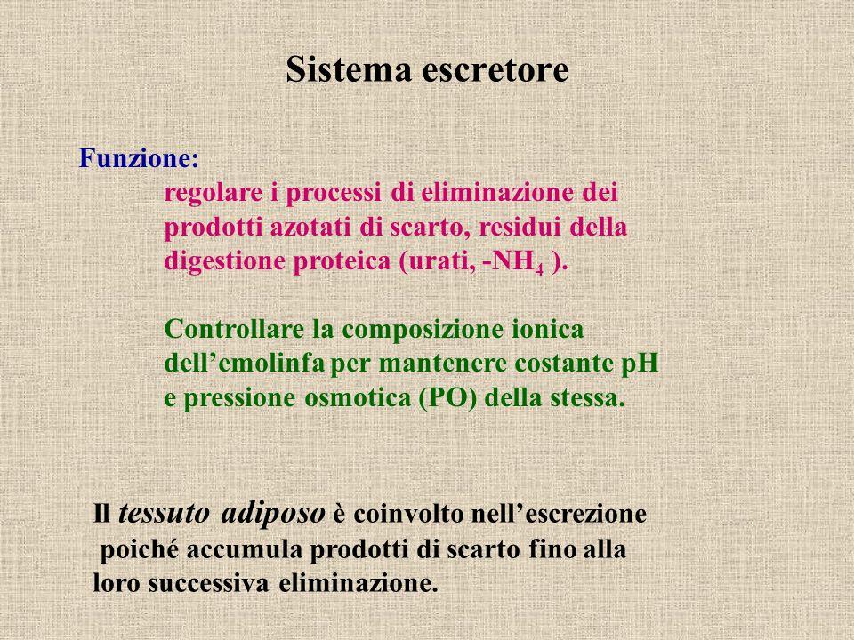 Sistema escretore Funzione: regolare i processi di eliminazione dei