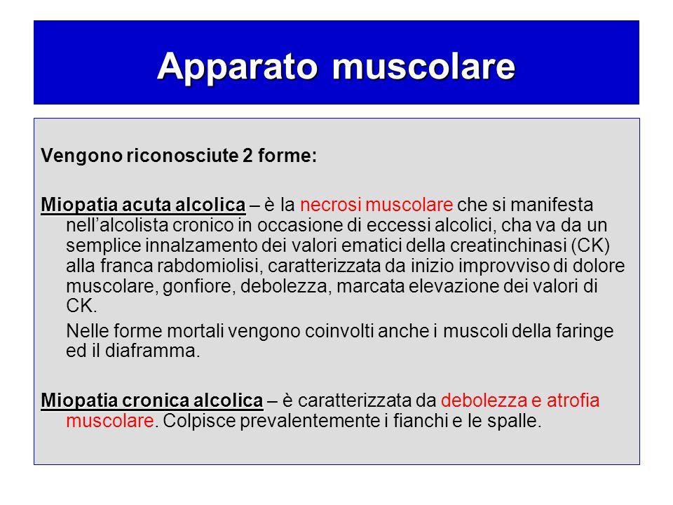 Apparato muscolare Vengono riconosciute 2 forme: