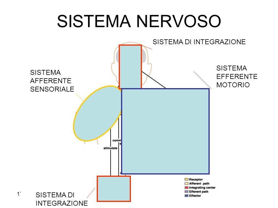 SISTEMA NERVOSO SISTEMA DI INTEGRAZIONE SISTEMA EFFERENTE MOTORIO