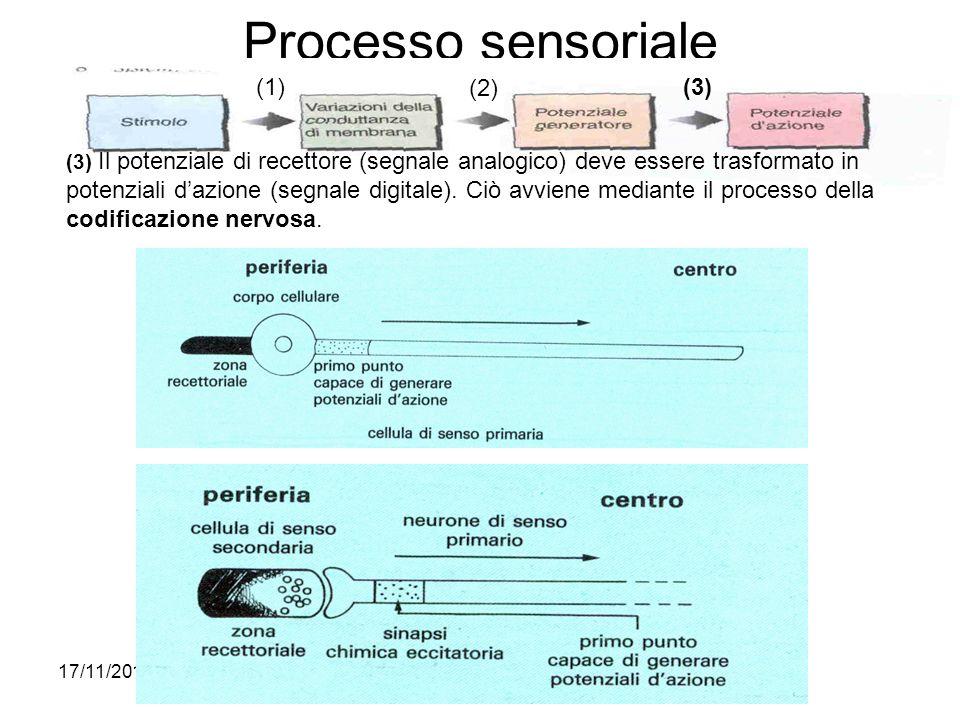 Processo sensoriale (1) (2) (3)