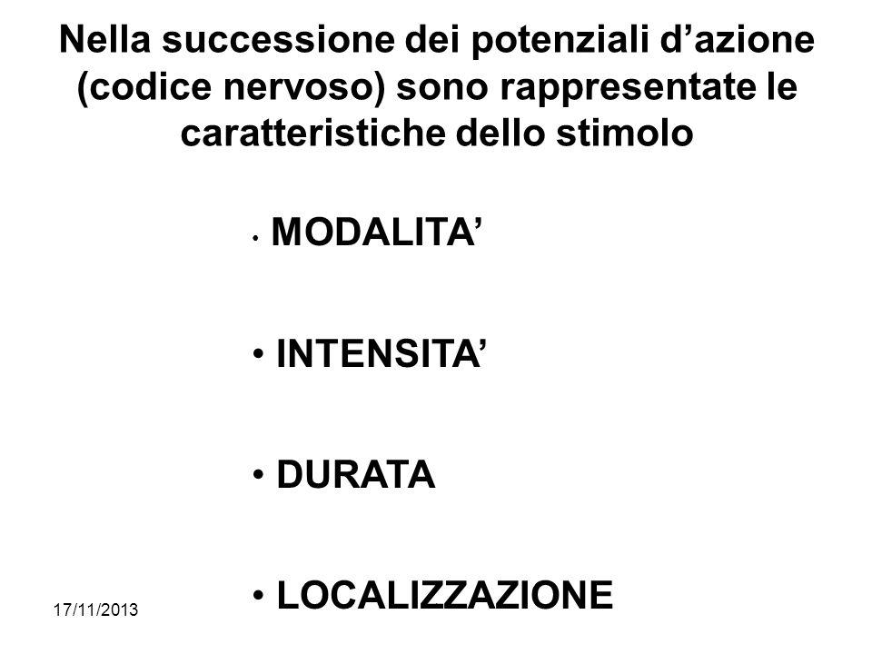 Nella successione dei potenziali d'azione (codice nervoso) sono rappresentate le caratteristiche dello stimolo