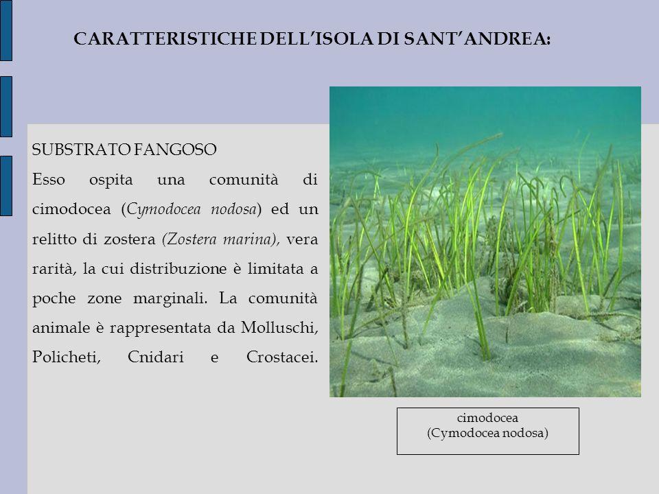 CARATTERISTICHE DELL'ISOLA DI SANT'ANDREA: