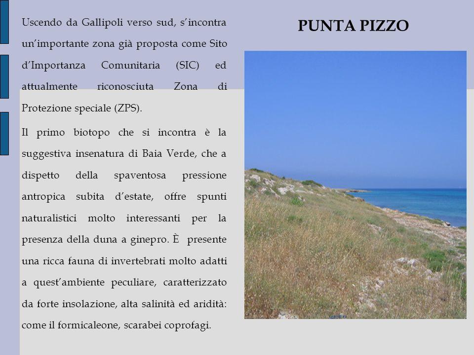 Uscendo da Gallipoli verso sud, s'incontra un'importante zona già proposta come Sito d'Importanza Comunitaria (SIC) ed attualmente riconosciuta Zona di Protezione speciale (ZPS).