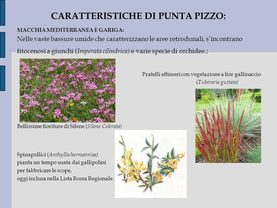 CARATTERISTICHE DI PUNTA PIZZO:
