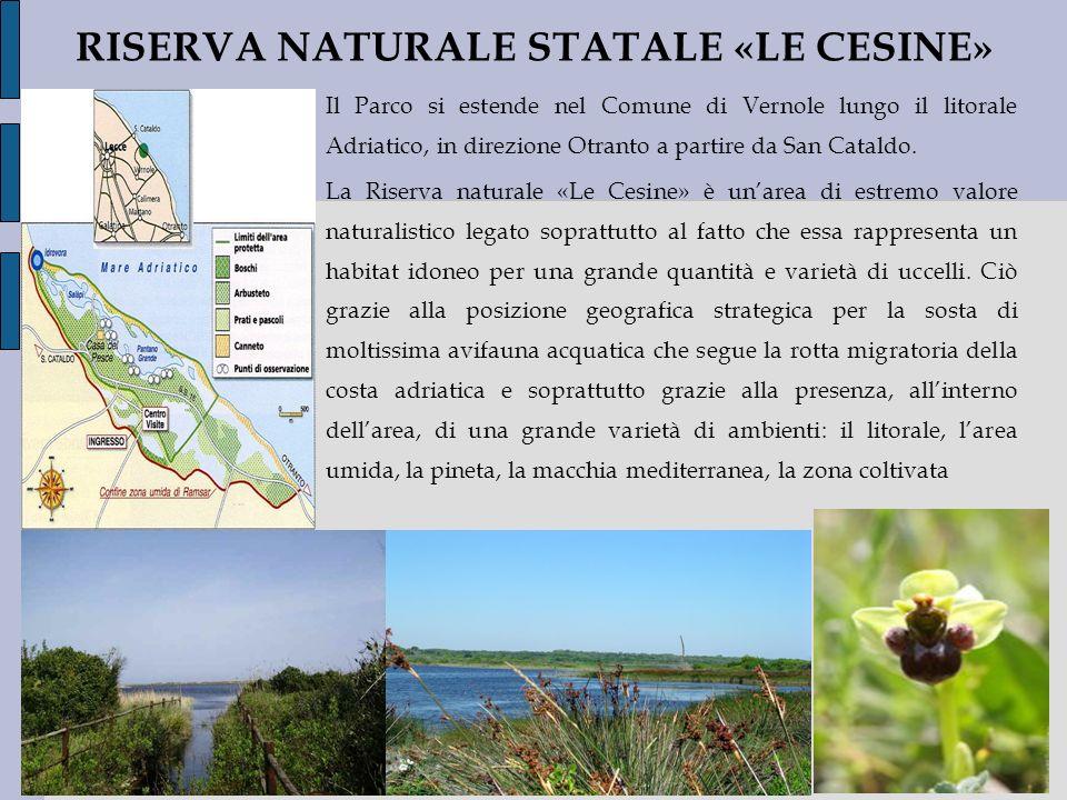 RISERVA NATURALE STATALE «LE CESINE»