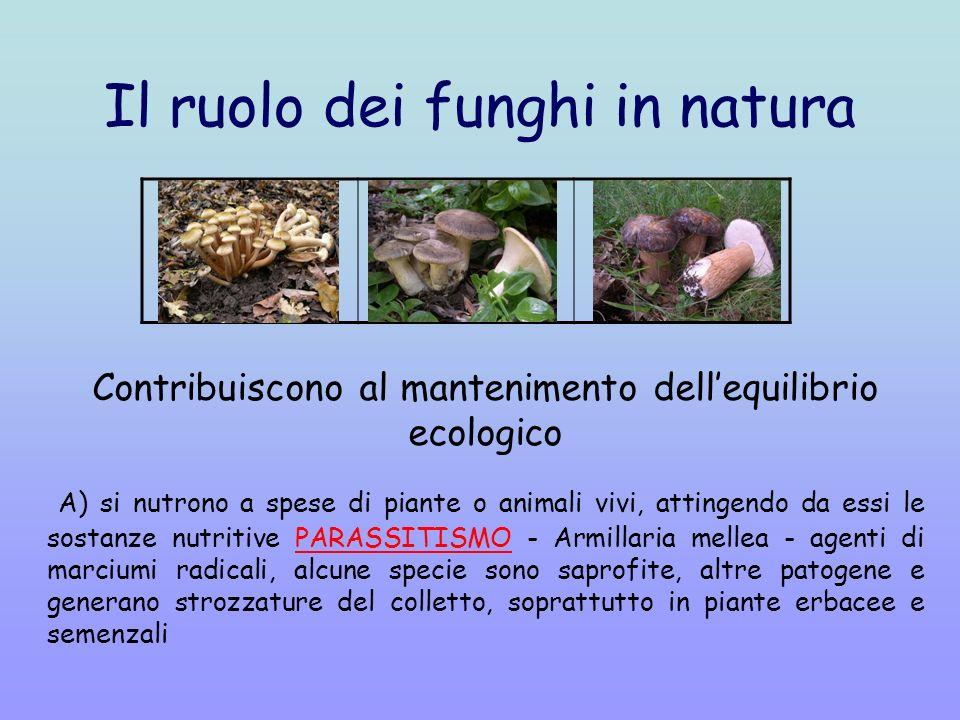 Il ruolo dei funghi in natura