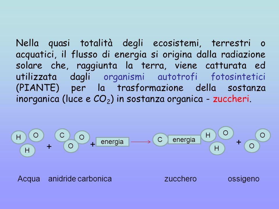 Nella quasi totalità degli ecosistemi, terrestri o acquatici, il flusso di energia si origina dalla radiazione solare che, raggiunta la terra, viene catturata ed utilizzata dagli organismi autotrofi fotosintetici (PIANTE) per la trasformazione della sostanza inorganica (luce e CO2) in sostanza organica - zuccheri.