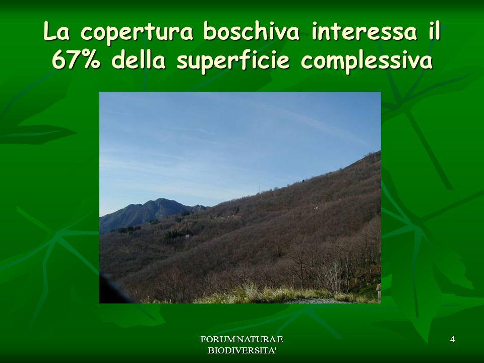 La copertura boschiva interessa il 67% della superficie complessiva