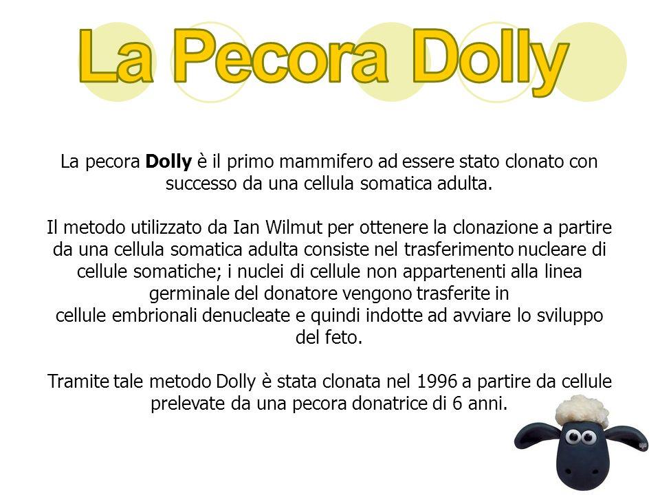 La Pecora Dolly La pecora Dolly è il primo mammifero ad essere stato clonato con successo da una cellula somatica adulta.