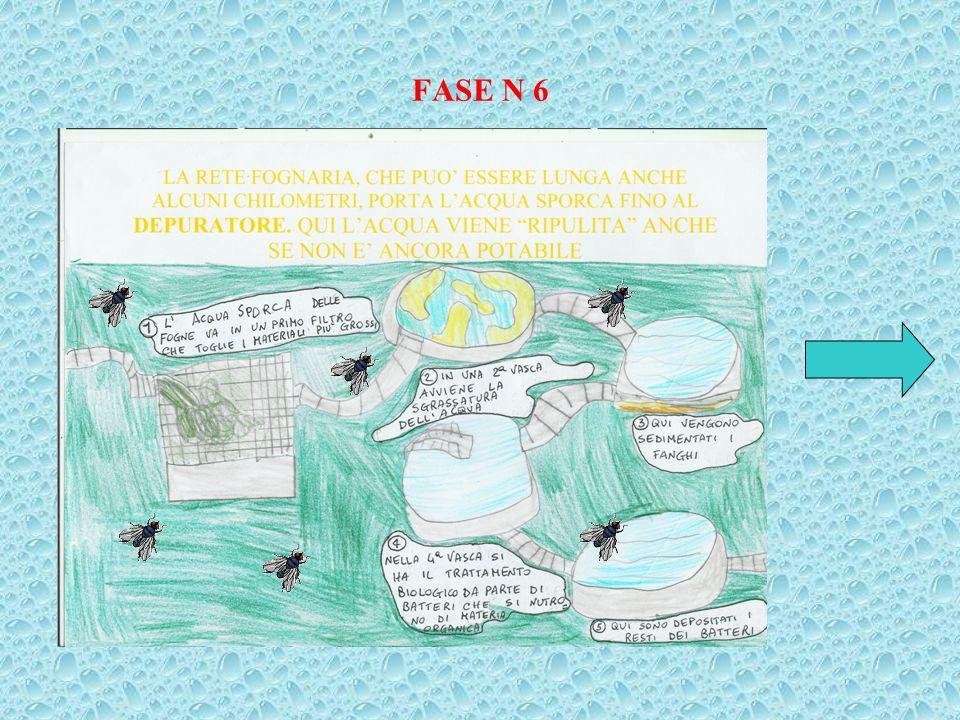 FASE N 6