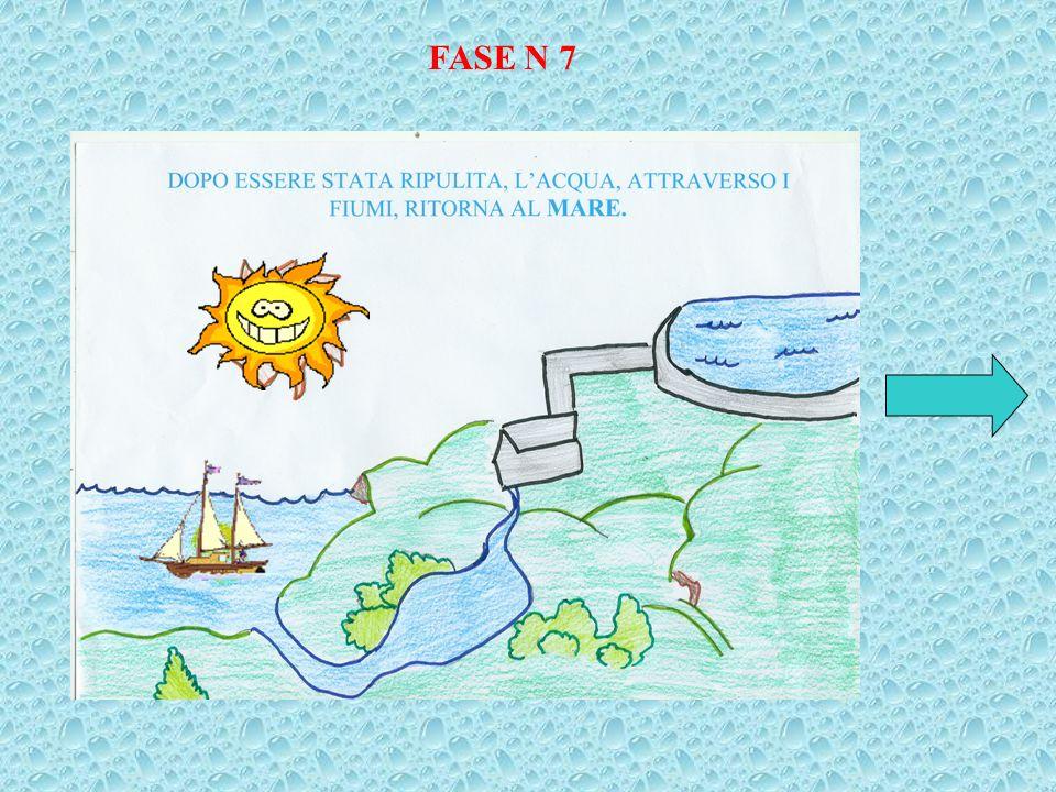 FASE N 7