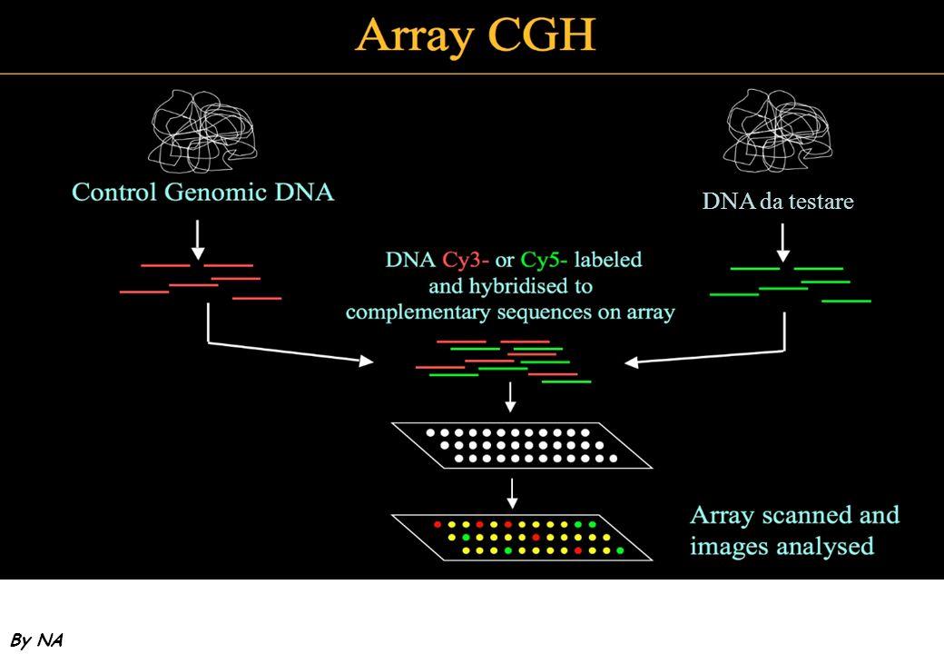DNA da testareEvoluzione: Cambiamento prospettico che ribalta la visione statica. Introduce in tempo come variabile.