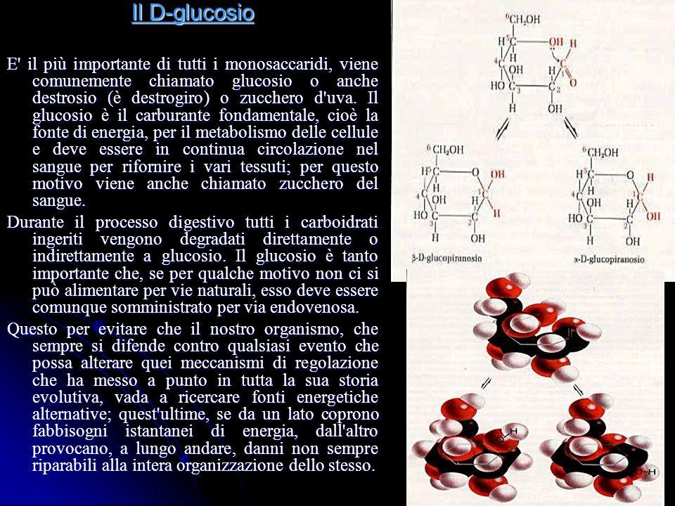 Il D-glucosio