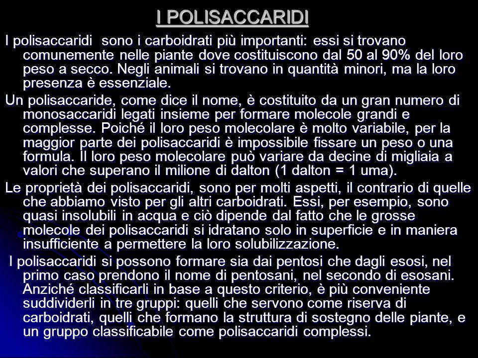 I POLISACCARIDI