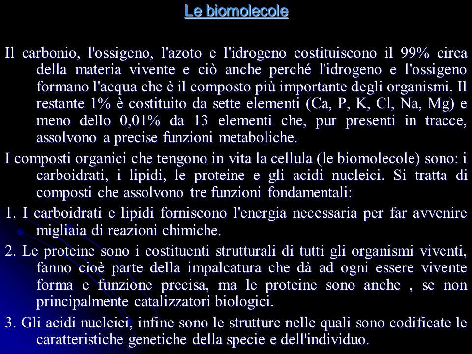 Le biomolecole