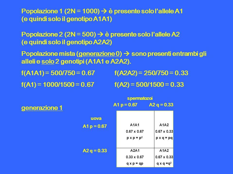Popolazione 1 (2N = 1000)  è presente solo l'allele A1