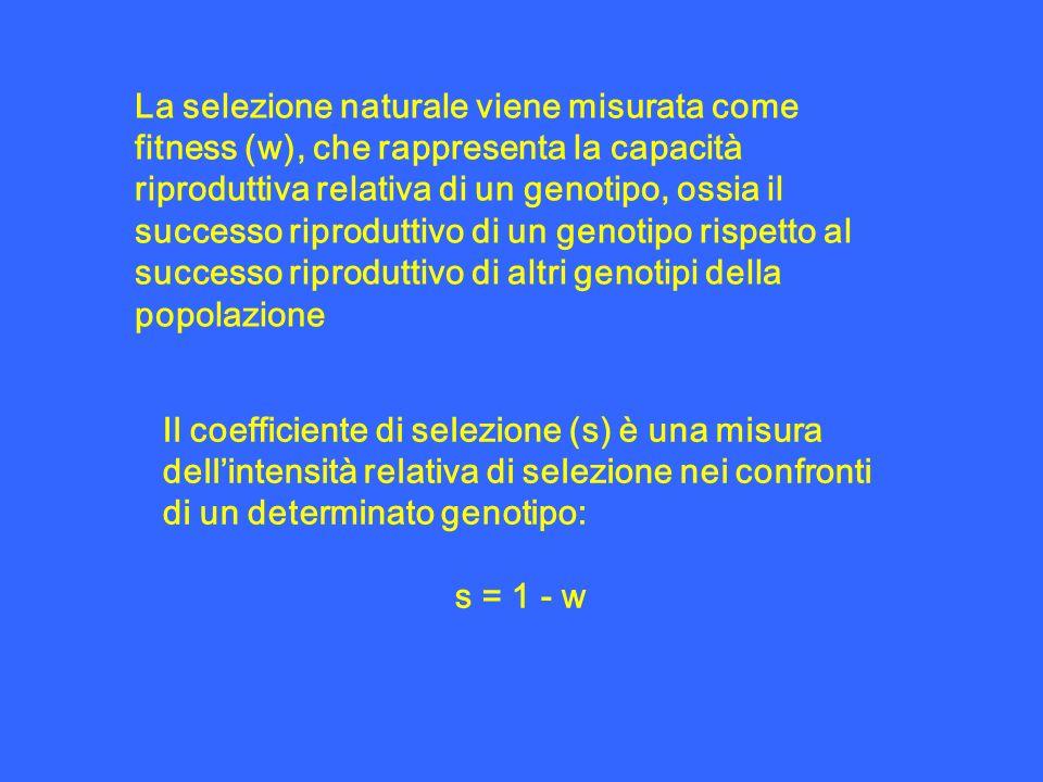 La selezione naturale viene misurata come fitness (w), che rappresenta la capacità riproduttiva relativa di un genotipo, ossia il successo riproduttivo di un genotipo rispetto al successo riproduttivo di altri genotipi della popolazione