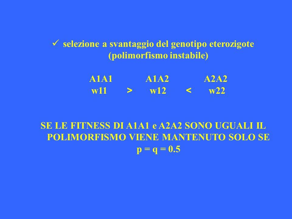 selezione a svantaggio del genotipo eterozigote (polimorfismo instabile)