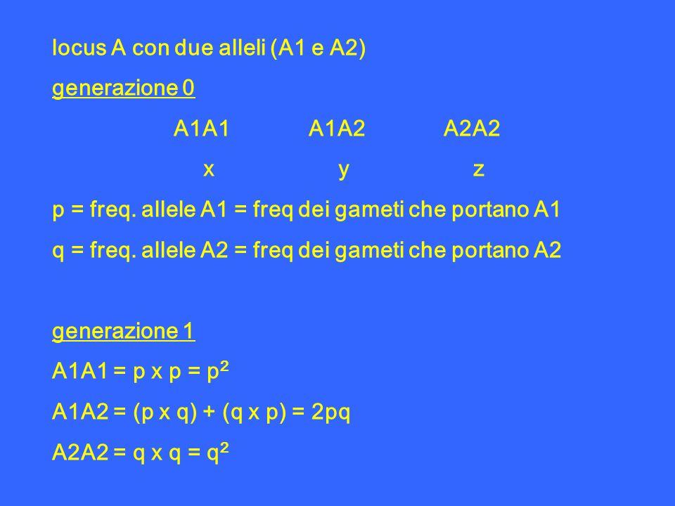 locus A con due alleli (A1 e A2)