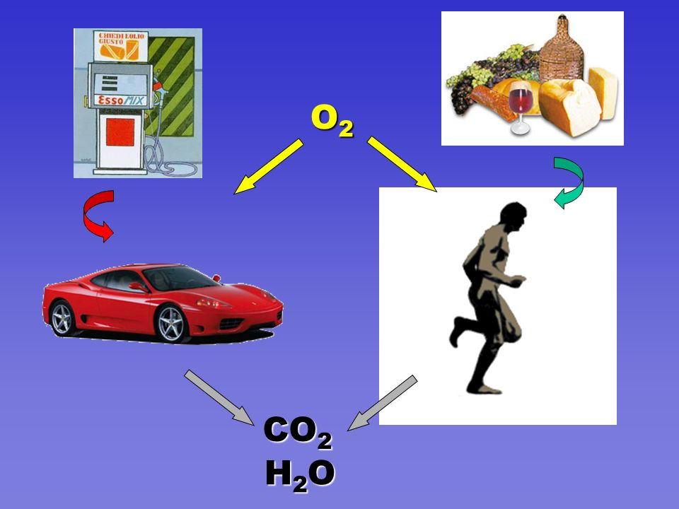 O2 CO2 H2O