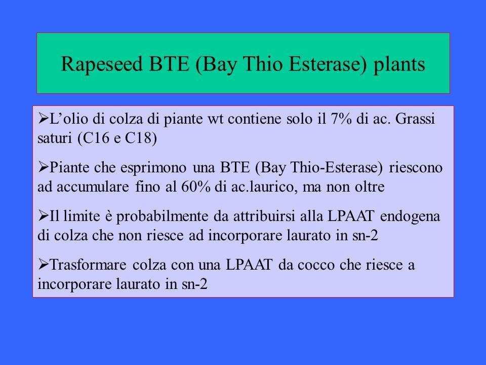 Rapeseed BTE (Bay Thio Esterase) plants