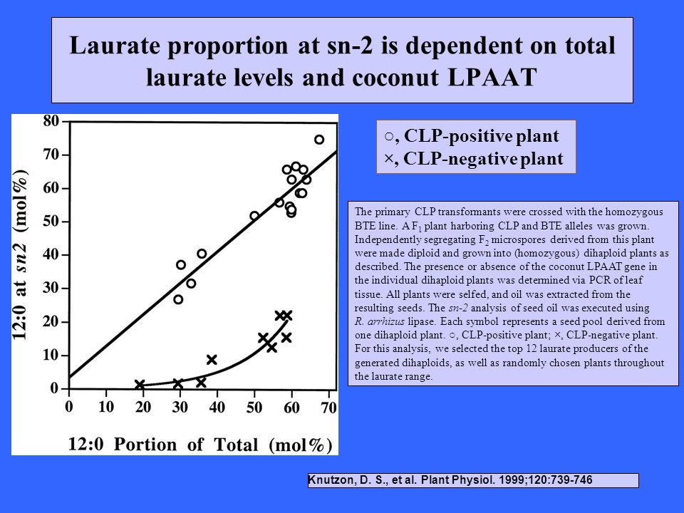 Laurate proportion at sn-2 is dependent on total laurate levels and coconut LPAAT